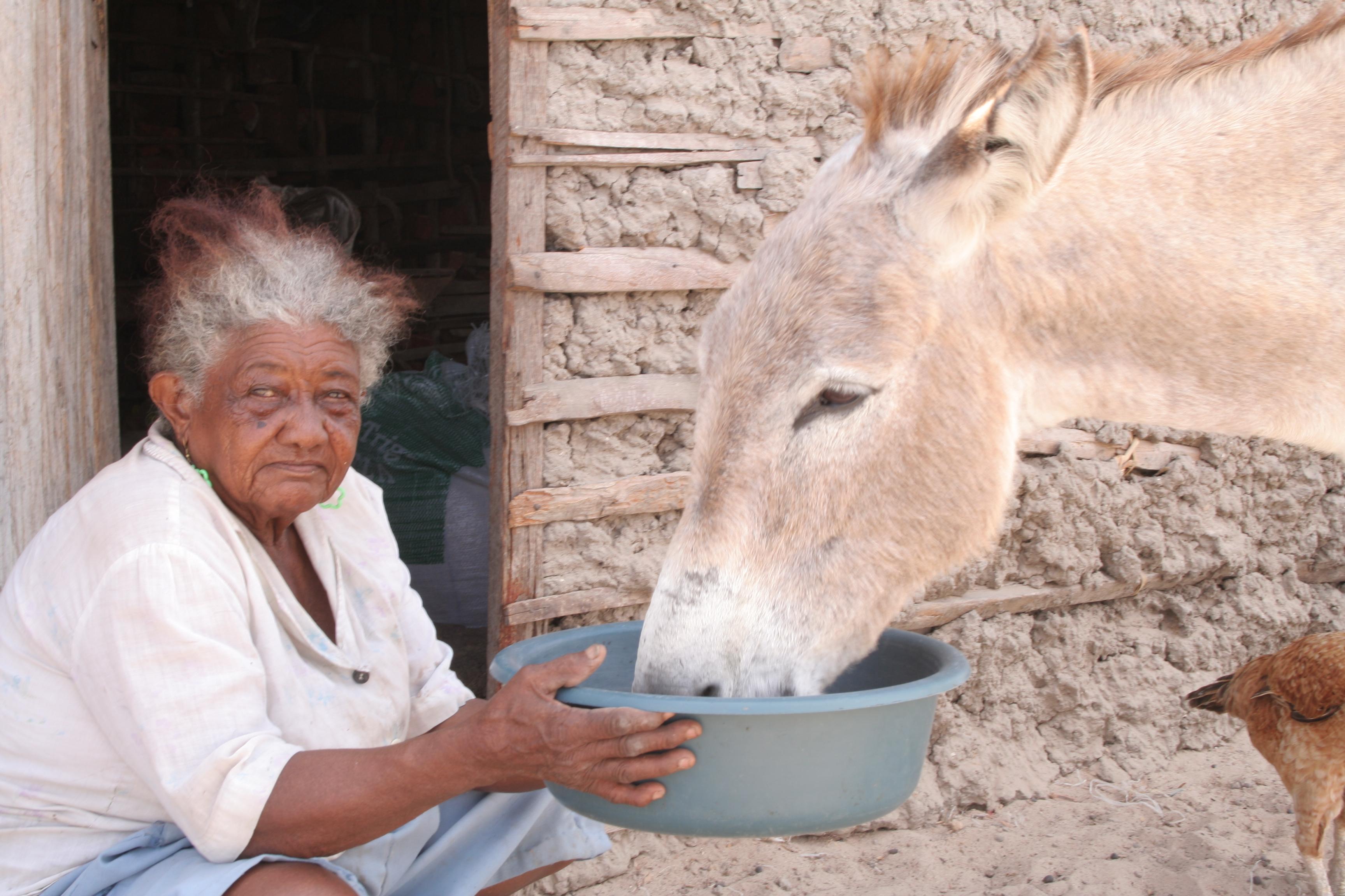 The Sea of pilgrim Antonio - Maria Altina (92) feeds one of her donkeys.