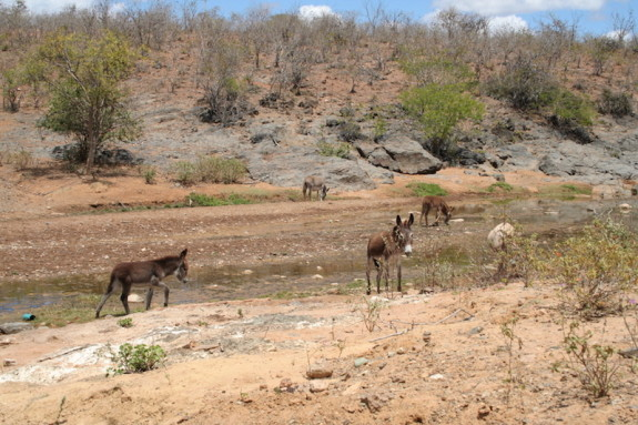 Esel am trockenen Fluss
